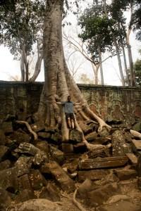 ta-phrom-tree
